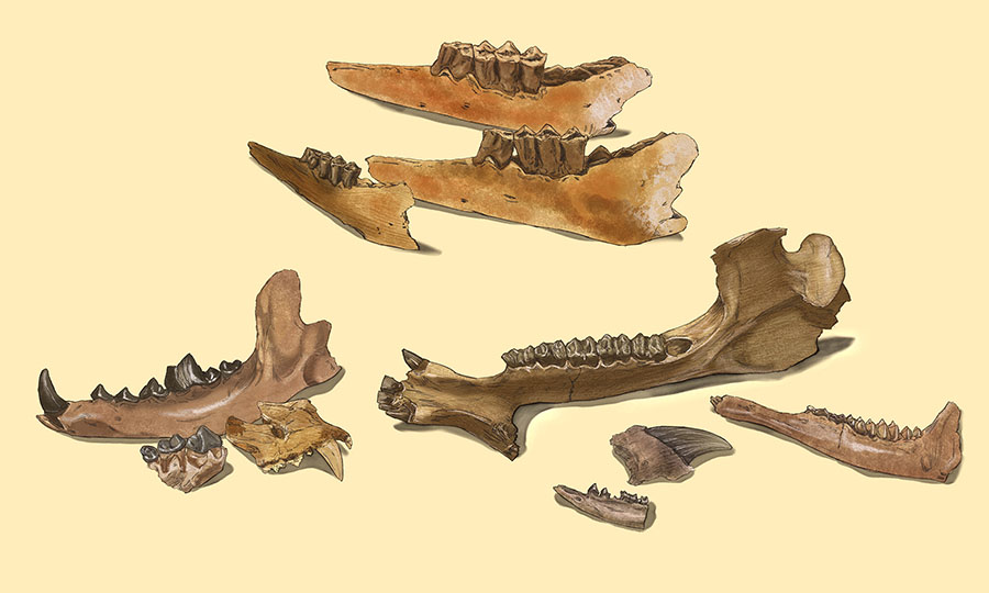York County Fossils by Karen Carr