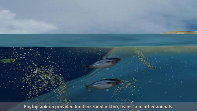 Smithsonian Sea Monsters Unearthed! What Happens When an Ocean is Formed?