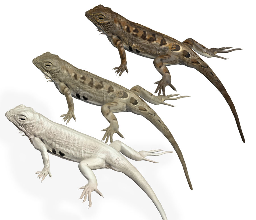 White Sands Earless Lizard, color variations by Karen Carr