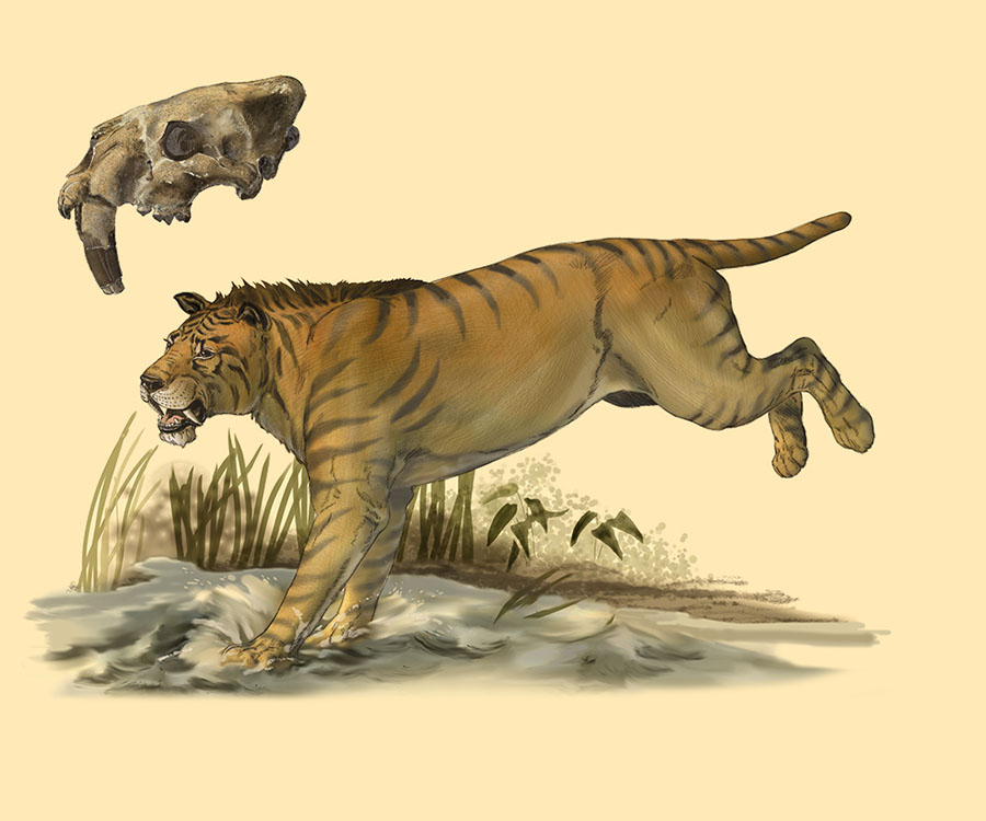 York County Smilodon by Karen Carr