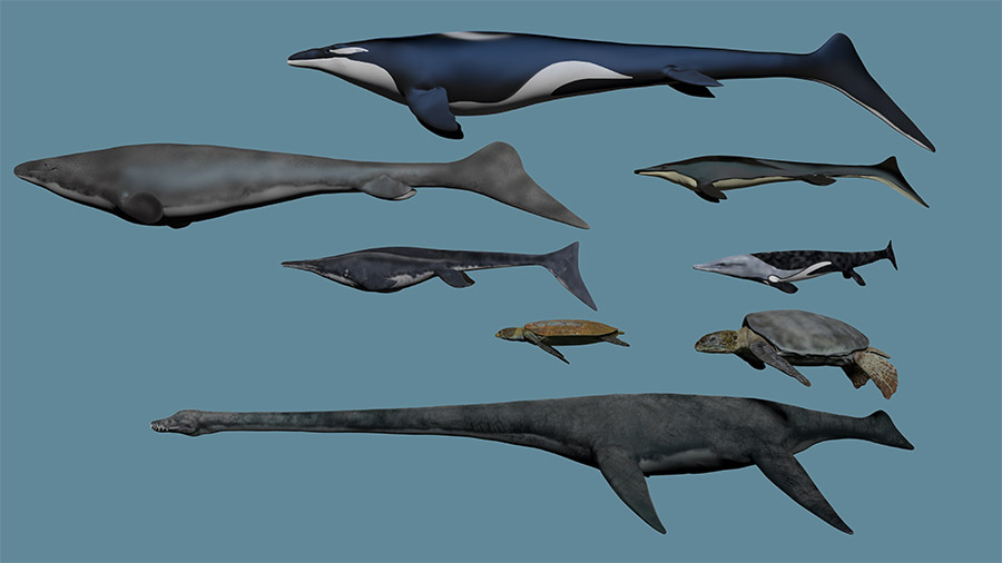 Smithsonian Sea Monsters Unearthed! Prominent Marine Life by Karen Carr